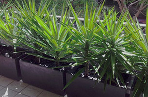 Balcony Plant Rental Greater Sydney Area