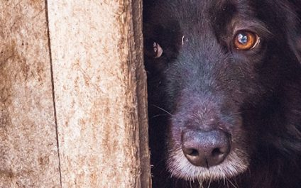 Dog-bite cases that teach a valuable lesson about animal cruelty