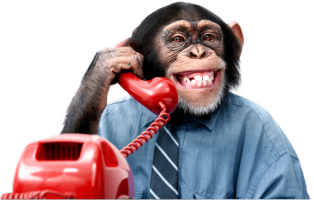 VoIP:  The Call of the Wild