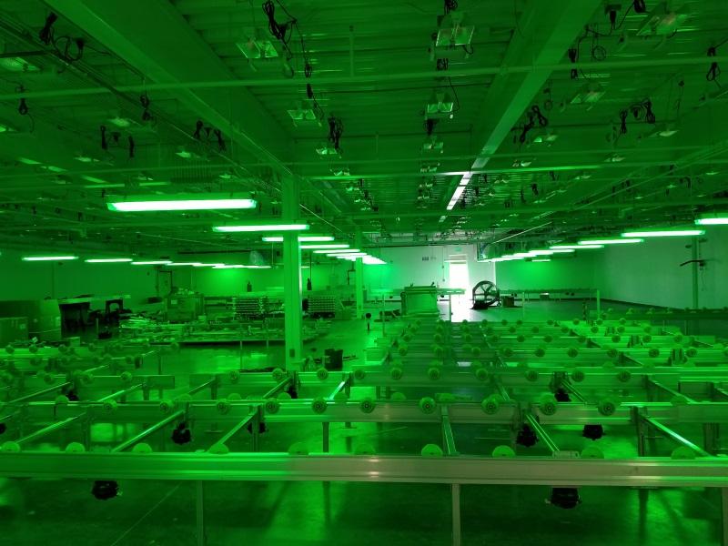Lighting Grow Room