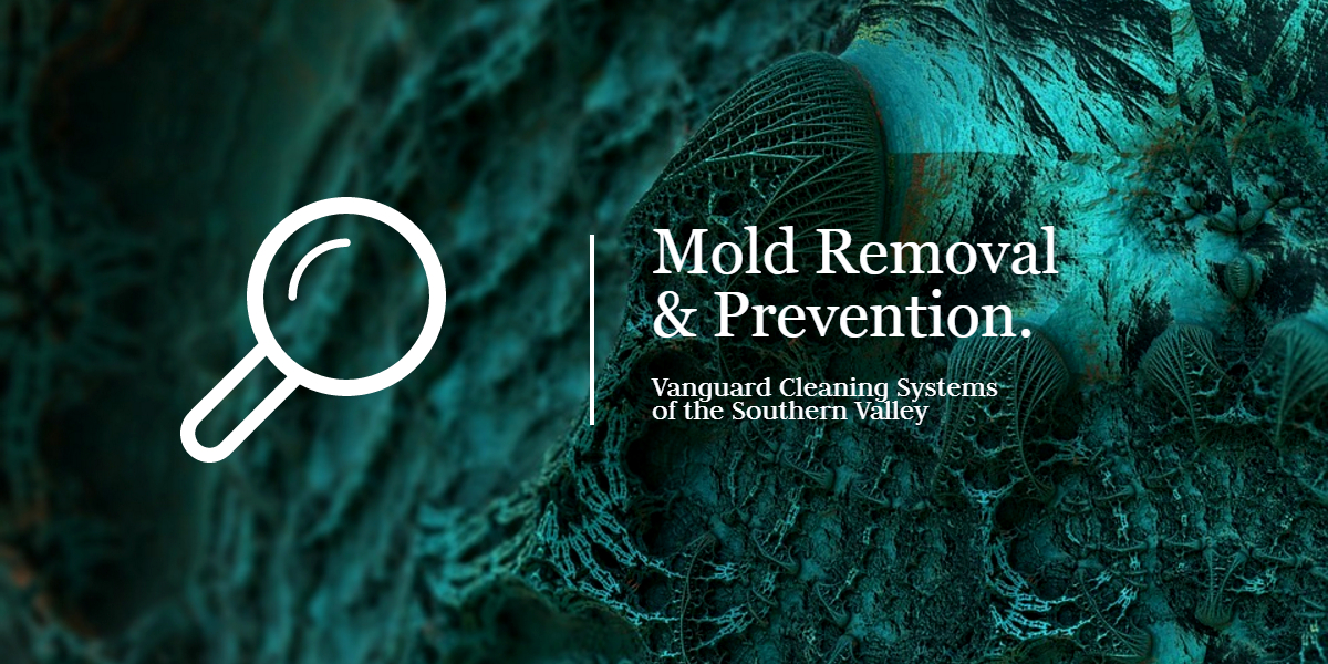 Cleaning-Services-and-Mold-Removal-and-Prevention-Valencia-CA-1