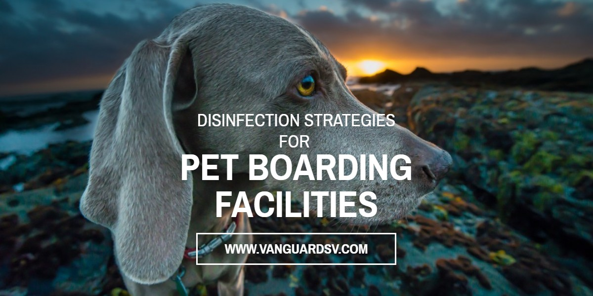 Janitorial Services and Disinfection Strategies for Pet Boarding Facilities - Fresno CA