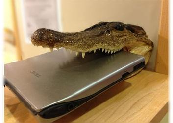 Crocodile-Photoshopped-1