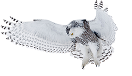 footer_owl_new